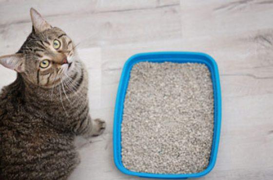 En İyi Kedi Kumu Tavsiyeleri – (2021 Modelleri)